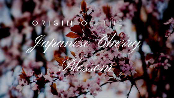 The History Of The Japanese Cherry Blossom Tree