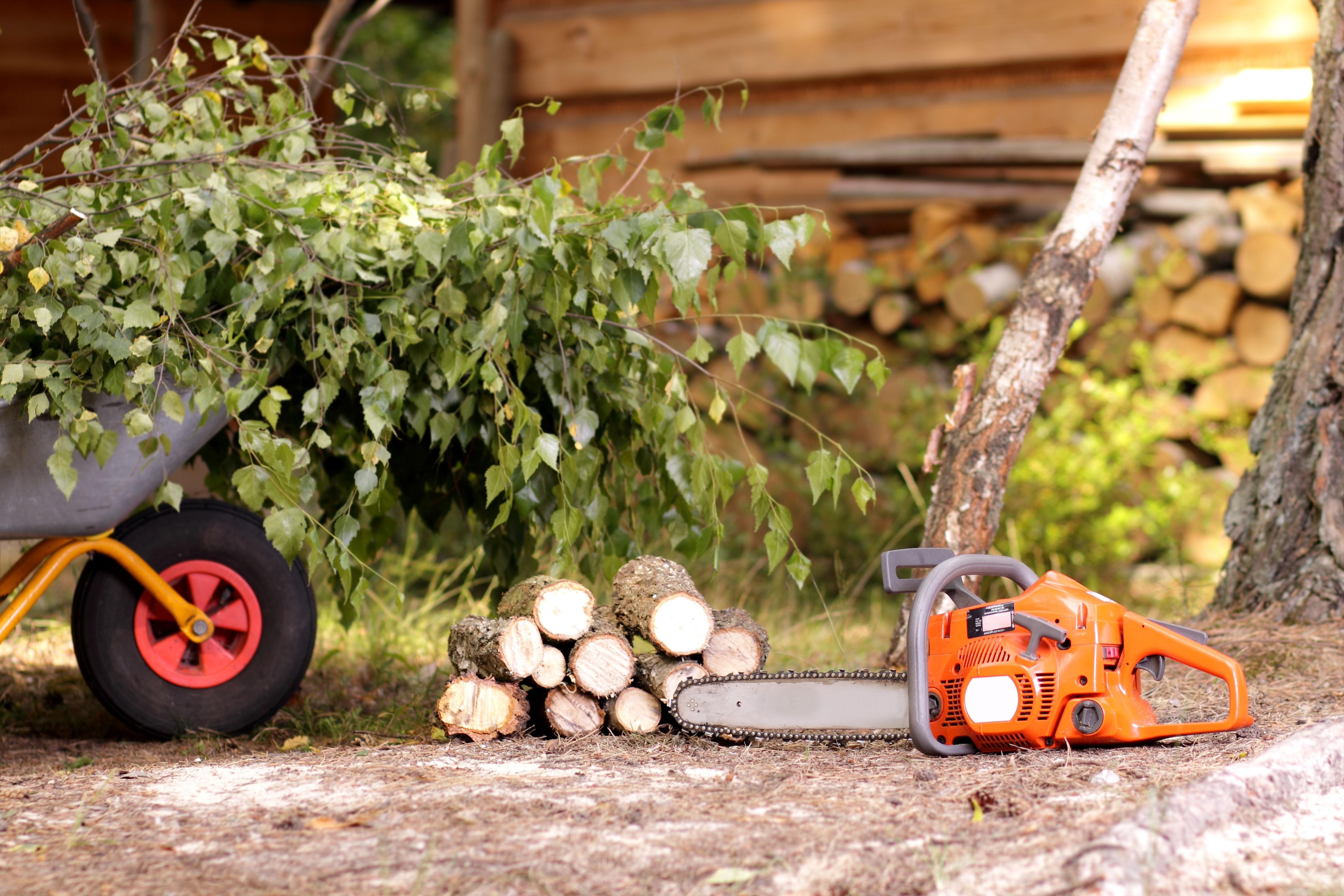 tree care services in kansas city