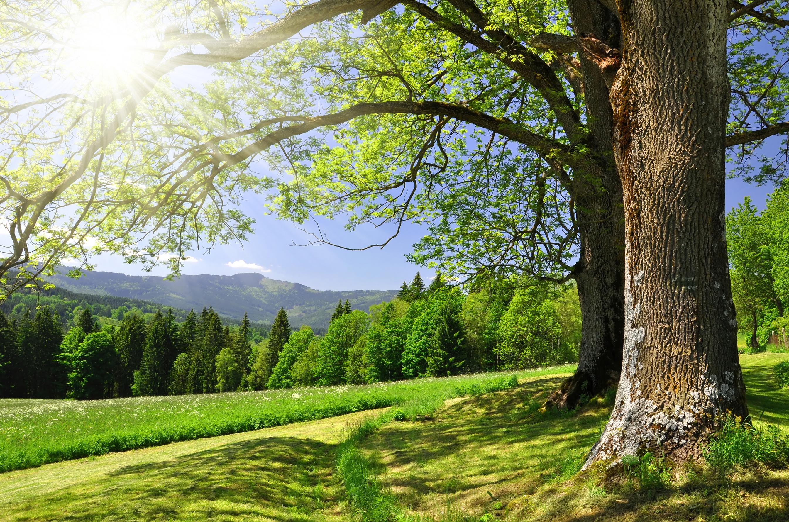 cartwright tree care
