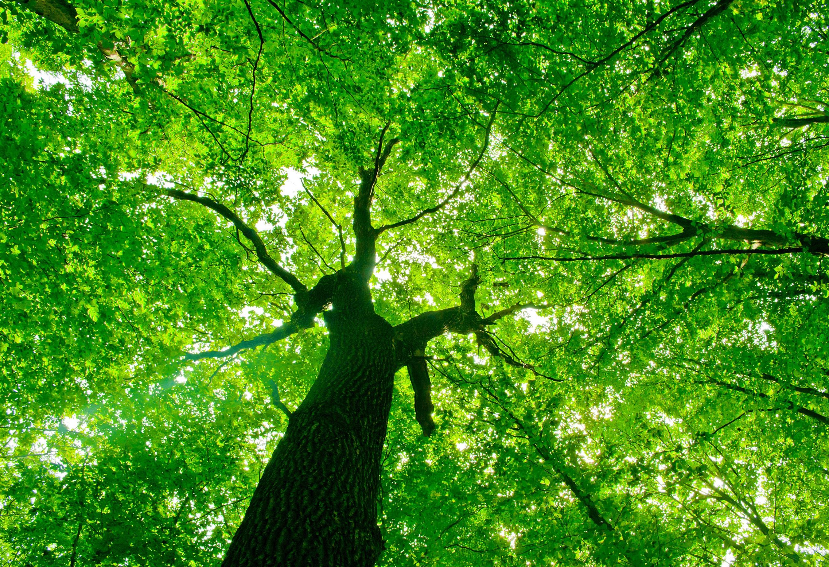 Beautiful tree canopy