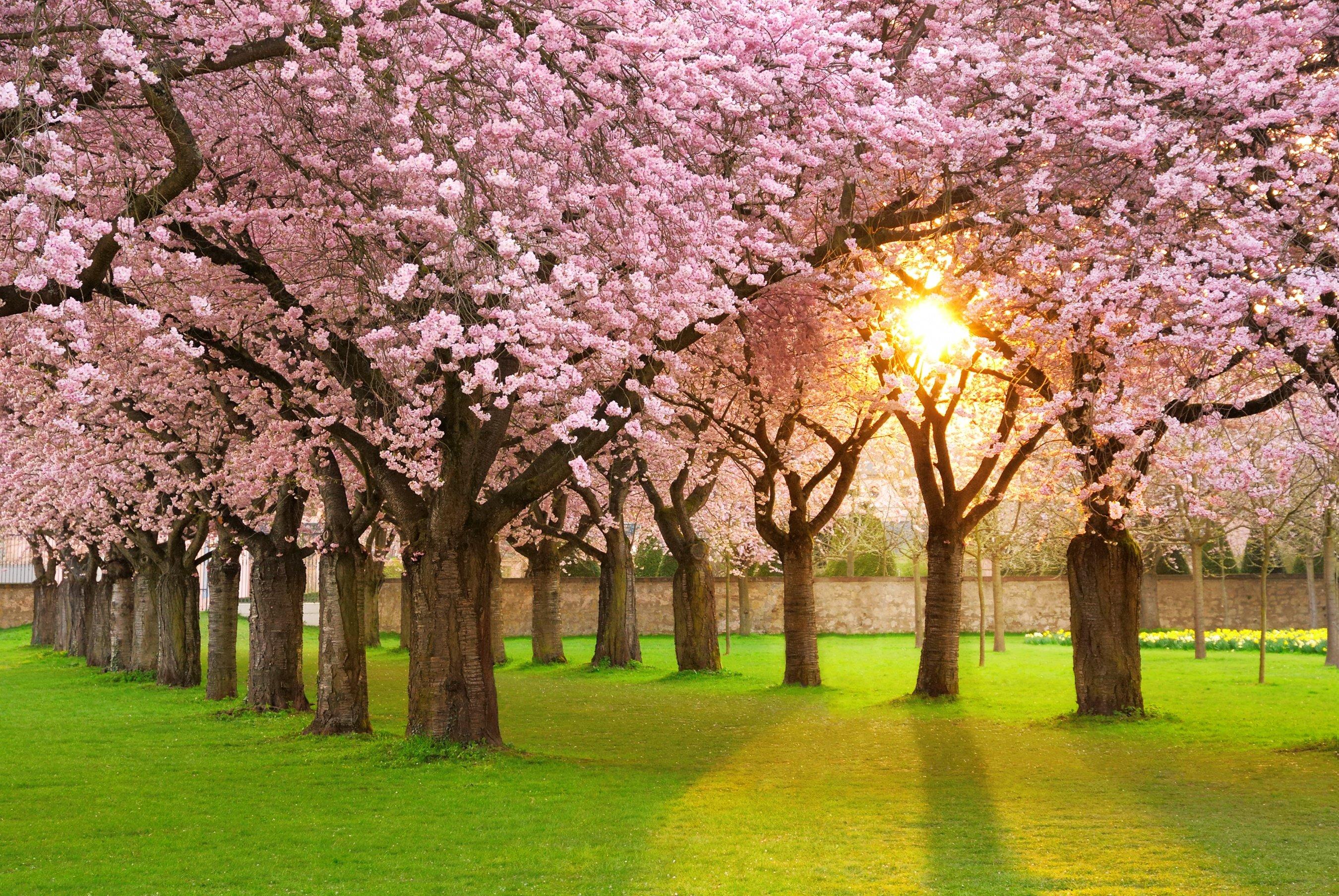 Spring tree trimming in kansas city